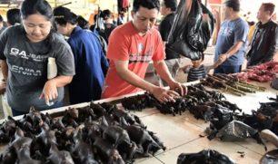 الصين تتحدى التحذيرات..وتعيد فتح أسواق الخفافيش والكلاب والقطط
