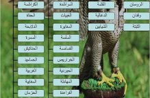 """""""عتيبة"""" قبيلة المشاهير.. جامعة عربية عريقة ينتمي إليها الوزير الجبري"""