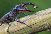 أسراب الحشرات السوداء تغزو غرب سنغافورة.. وتمنع الأطفال من الخروج
