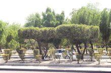 هل تسبّبَتْ #الشجرة_الملعونة بغرق الكويت؟!