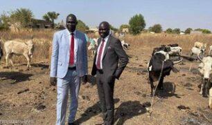 في جنوب السودان.. مهر ابنة الرئيس 500 بقرة