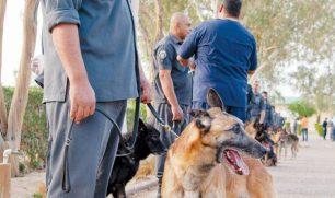 29 كلباً بوليسياً بيعت بـ6 آلاف دينار..