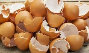 """فائدة """"سحرية"""" لقشر البيض في إعادة تكوين العظام المكسورة"""