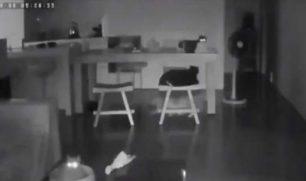 فيديو يظهر لحظة غريبة لرد فعل القطط قبل حدوث الزلزال